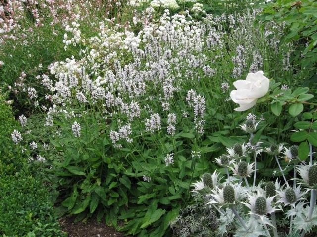 Weißer Garten Sissinghurst impressionen die kleine gärtnerei